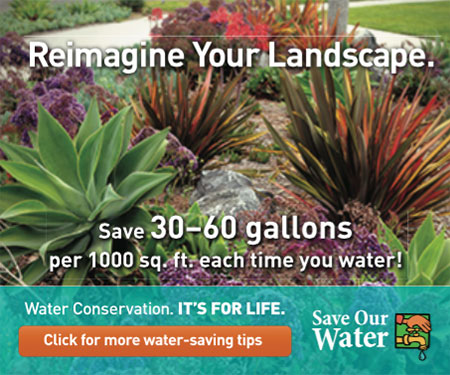 Reimagine Your Landscape