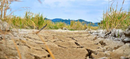 2015 Drought News
